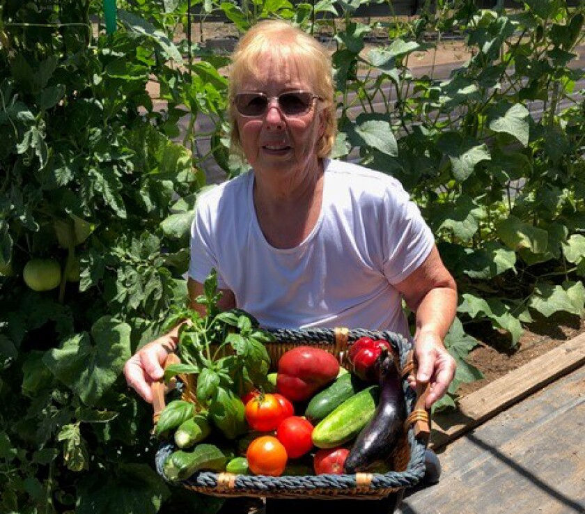 In a typical day, Liz Horelick harvests eggplants, zucchini, cucumbers, tomatoes, bell peppers and herbs.