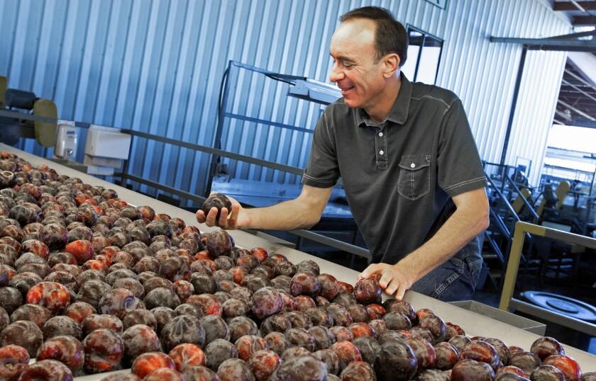Dan Gerawan, president of Gerawan Farming, inspects plums at his processing plant near Reedley, Calif.