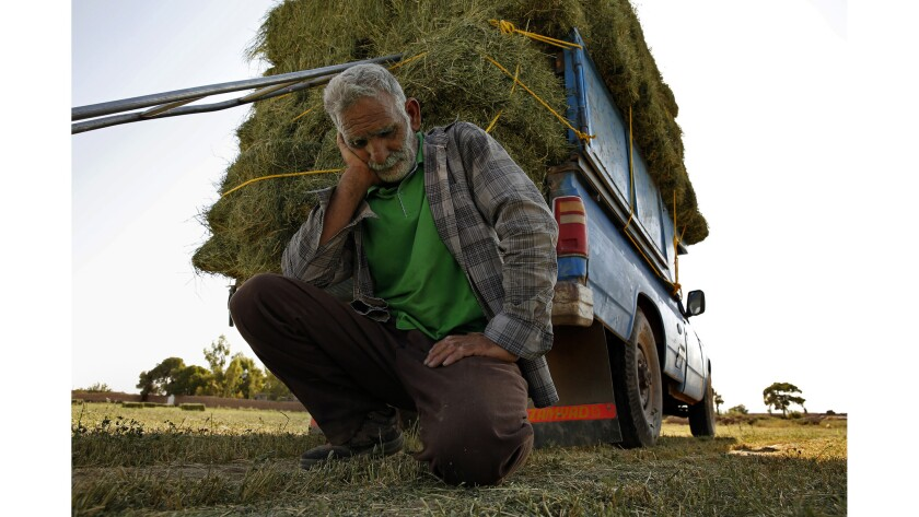 """Ten years ago, I swear, our water was fresh and plenty,"" said Karim Baluchi as he loaded hay onto a truck in Qiyasabad, Iran."