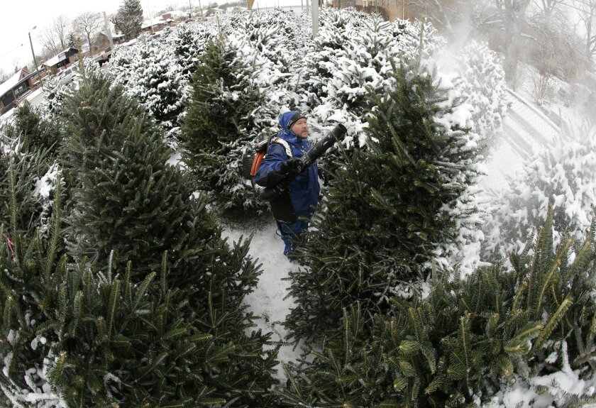 In this photo shot with a fisheye lens, Jim Cline removes the snow from Christmas trees for shoppers following a winter storm Friday, Dec. 6, 2013, in Indianapolis. Several inches of snow fell on central and southern Indiana, making driving treacherous and leading to at least two fatal crashes. (AP Photo/Darron Cummings)