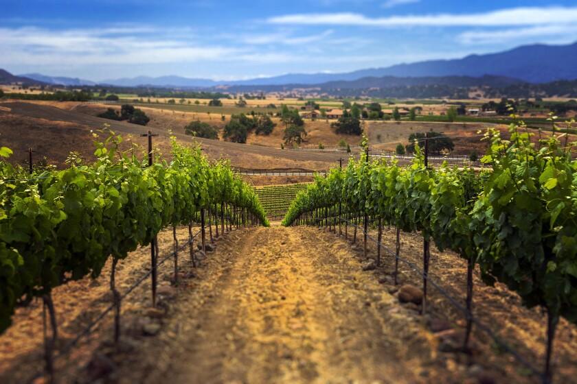 Wine country calling? Westerly Vineyard in Santa Barbara County's new AVA Happy Canyon