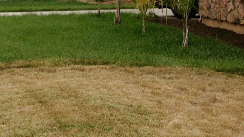 A brown lawn next to a green one in Perris.