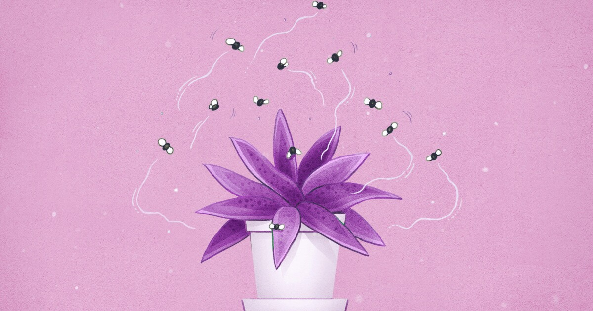How to keep your houseplants pest-free