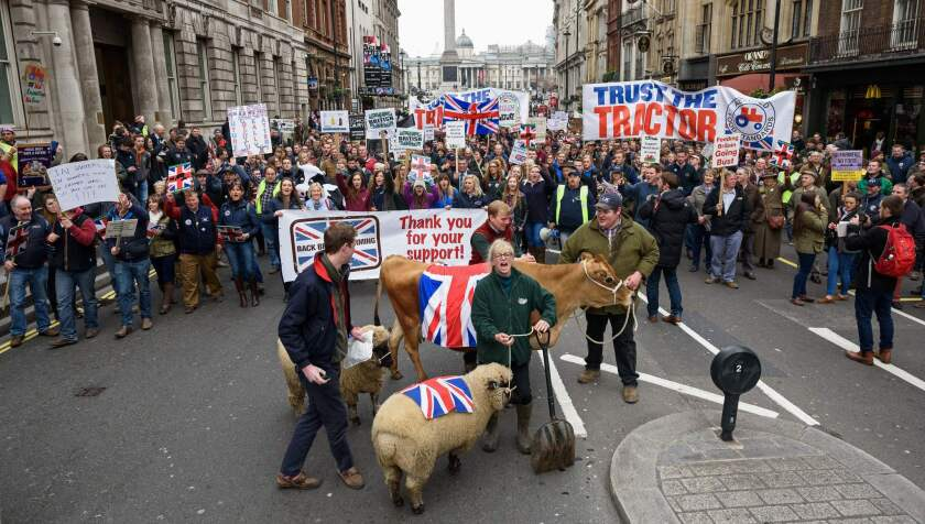 Cows and sheep are led along Whitehall during a march to Downing Street by the farming community to promote British farming in central London on March 23, 2016.