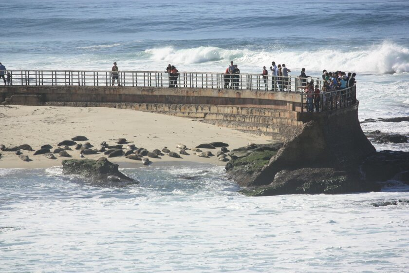 In January 2010, big surf hit the Children's Pool, near where two divers were rescued Friday night. Photo: Kathy Day