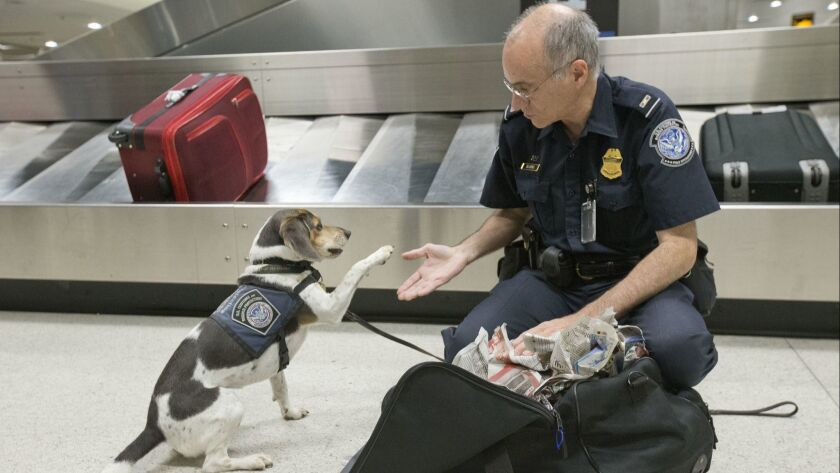 Customs agent James Silverio gives his dog five after discovery of agricultural products in a suitcase at Miami airport in 2018. Forgetting to declare food can lead to the loss of Global Entry.