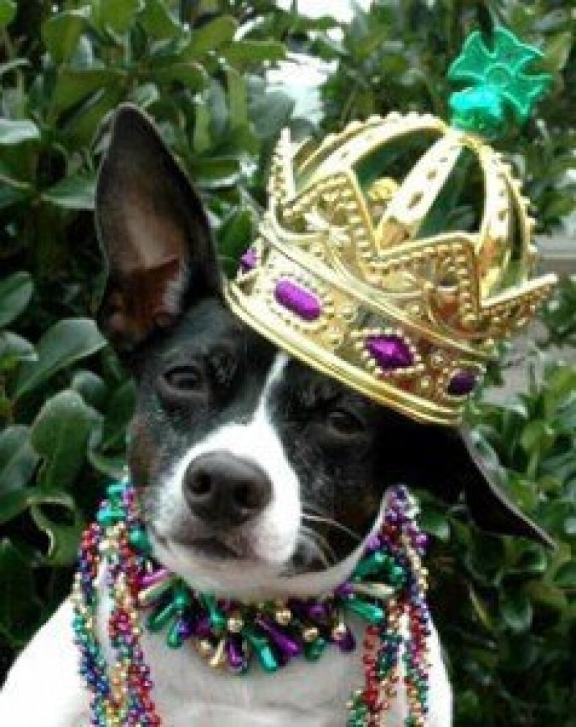Enter your pooch in the Canine Costume Contest.