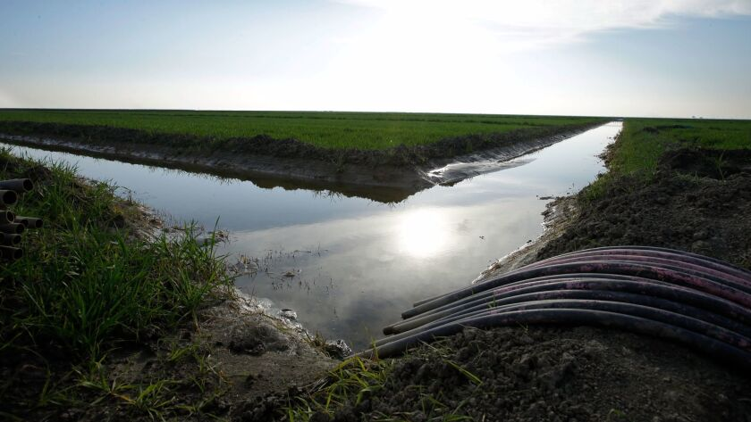 FILE - In this Feb. 25, 2016, file photo, water flows through an irrigation canal to crops near Lemo