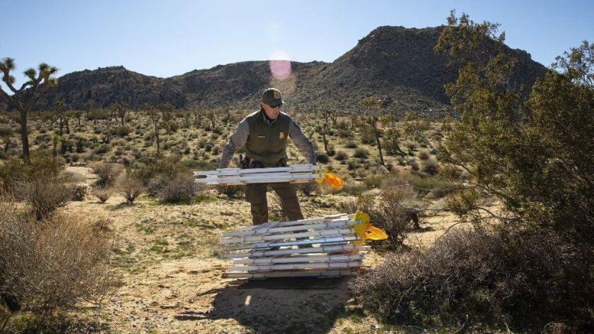 Park Ranger Rob Evans places temporary barriers off the side of the road near the entrance to Joshua Tree National Park on Dec. 29.