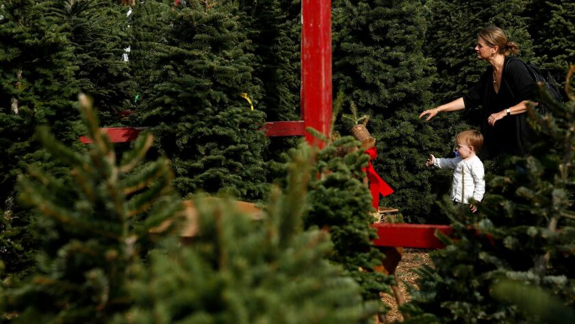 Larkin Abbott and her daughter Ellis, 2, shop for a Christmas tree at the Chauvet Tree Farms in Venice.