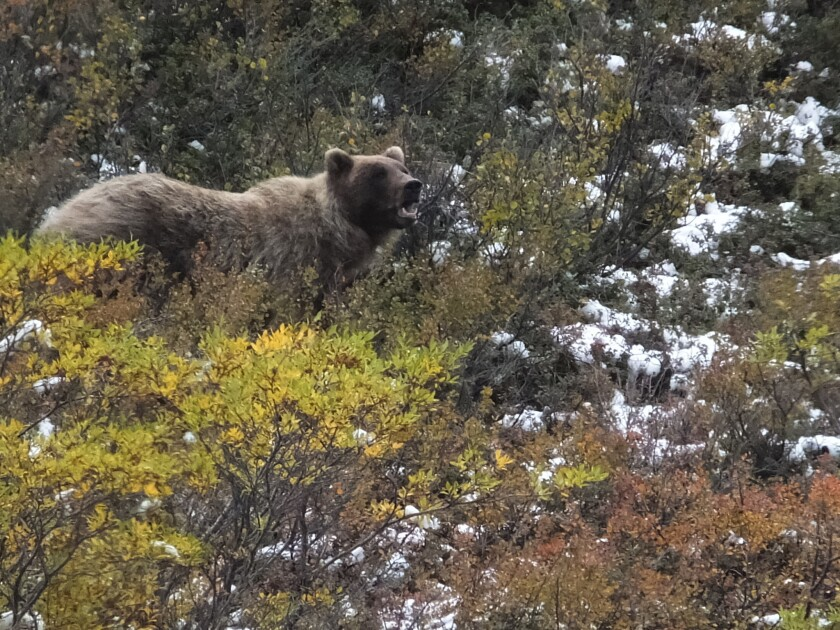A soldier at a base in Alaska was seriously injured after he shot a bear and the bear fell on top of him.