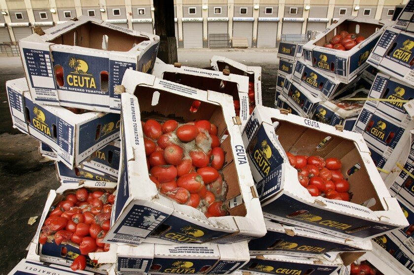 Stacks of boxes of moldy and rotten tomatoes.