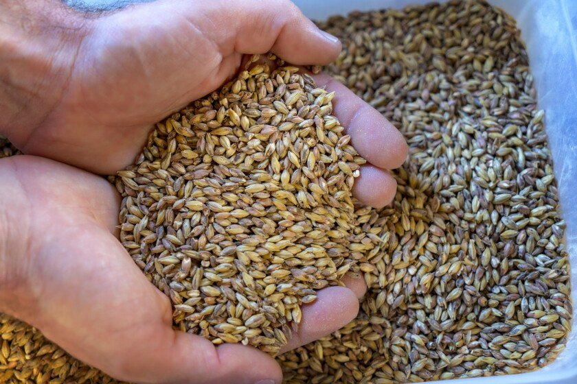 At Citizen Brewers choose your own ingredients to brew your own beer.