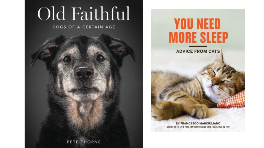"""""""Old Faithful: Dogs of a Certain Age"""" and """"You Need More Sleep: Advice from Cats"""""""