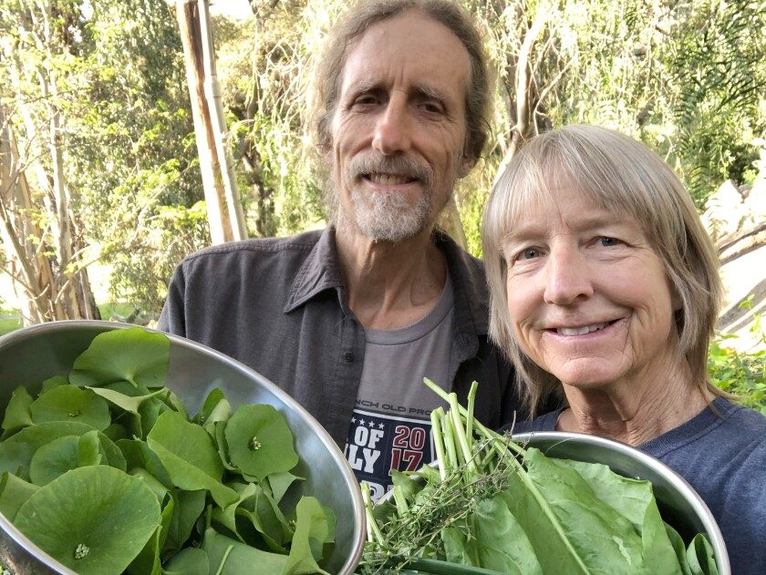 Chi Varnado, right, forages for edible greens with her husband, Kent Richardson.