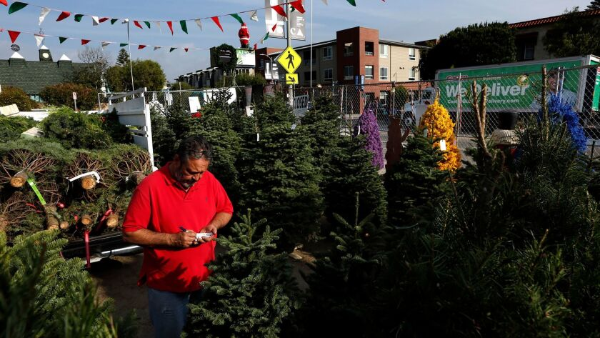 George Lopez, general manager of Charlie Lopez Christmas Trees, sets up trees on the lot at Rose Avenue and 5th Street in Venice.