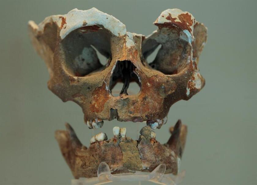 """Vista de un cráneo que perteneció a un niño de entre 5 y 10 años de edad que vivió entre 4530 a 4440 a.C, durante un recorrido por la exposición """"La cueva de Puyil"""", en Ciudad de México (México) hoy, martes 7 de agosto de 2018. EFE"""