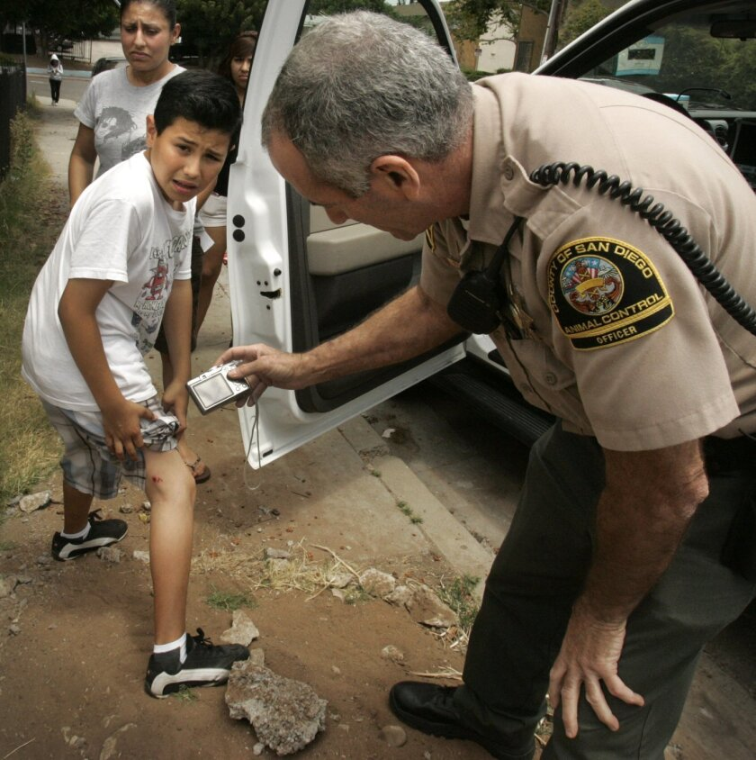 Animal control officer Mitchell Levy takes photos of a dog bite suffered by Daniel Rivera, 11, in City Heights recently.