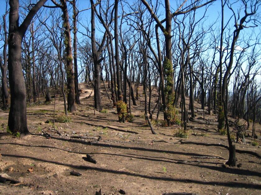 Australia Wildfires Burned Forever