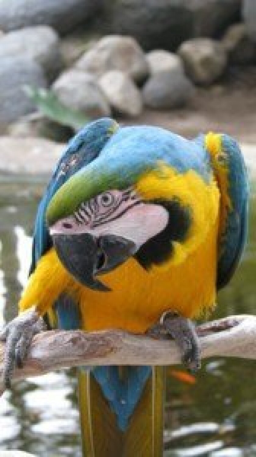 Free Flight, a nonprofit in Del Mar that shelters tropical birds, is holding a fundraiser on Oct. 11.