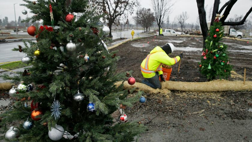 Framed between a pair of Christmas trees a worker secures a roll of wattle for erosion control in th