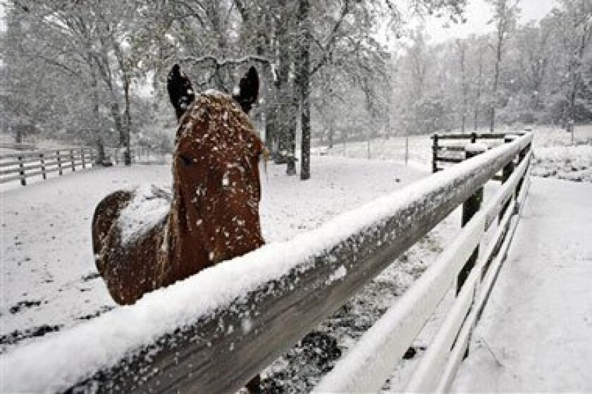 A snow covered horse in Carmel Valley,Calif., on Tuesday. The mountains around Los Angeles are under a winter storm warning while the National Weather Service issued a freeze watch for the Santa Ynez and Antelope valleys.