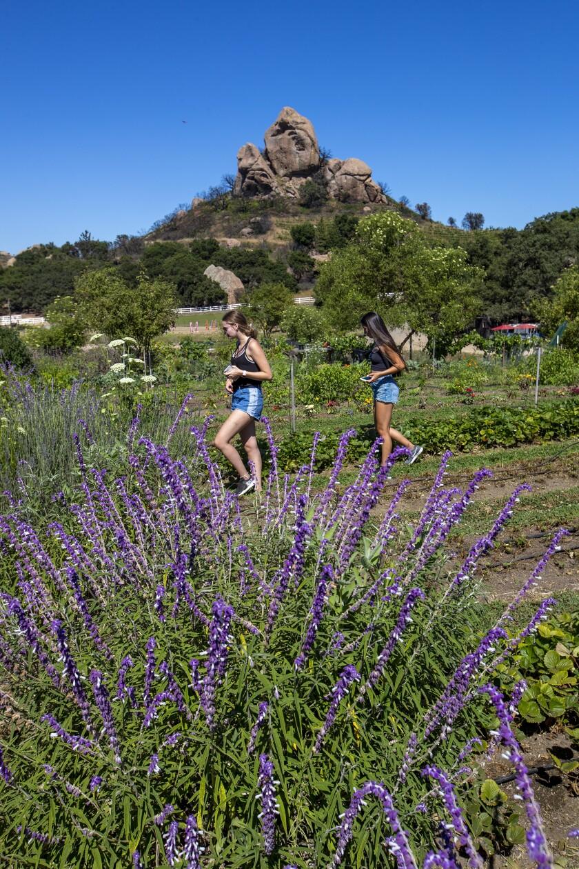 Two women on the Malibu Wine Hike at Saddlerock Ranch Estate.