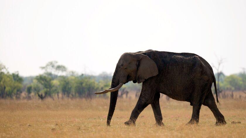 ZIMBABWE-PARK-HWANGE-FEATURE