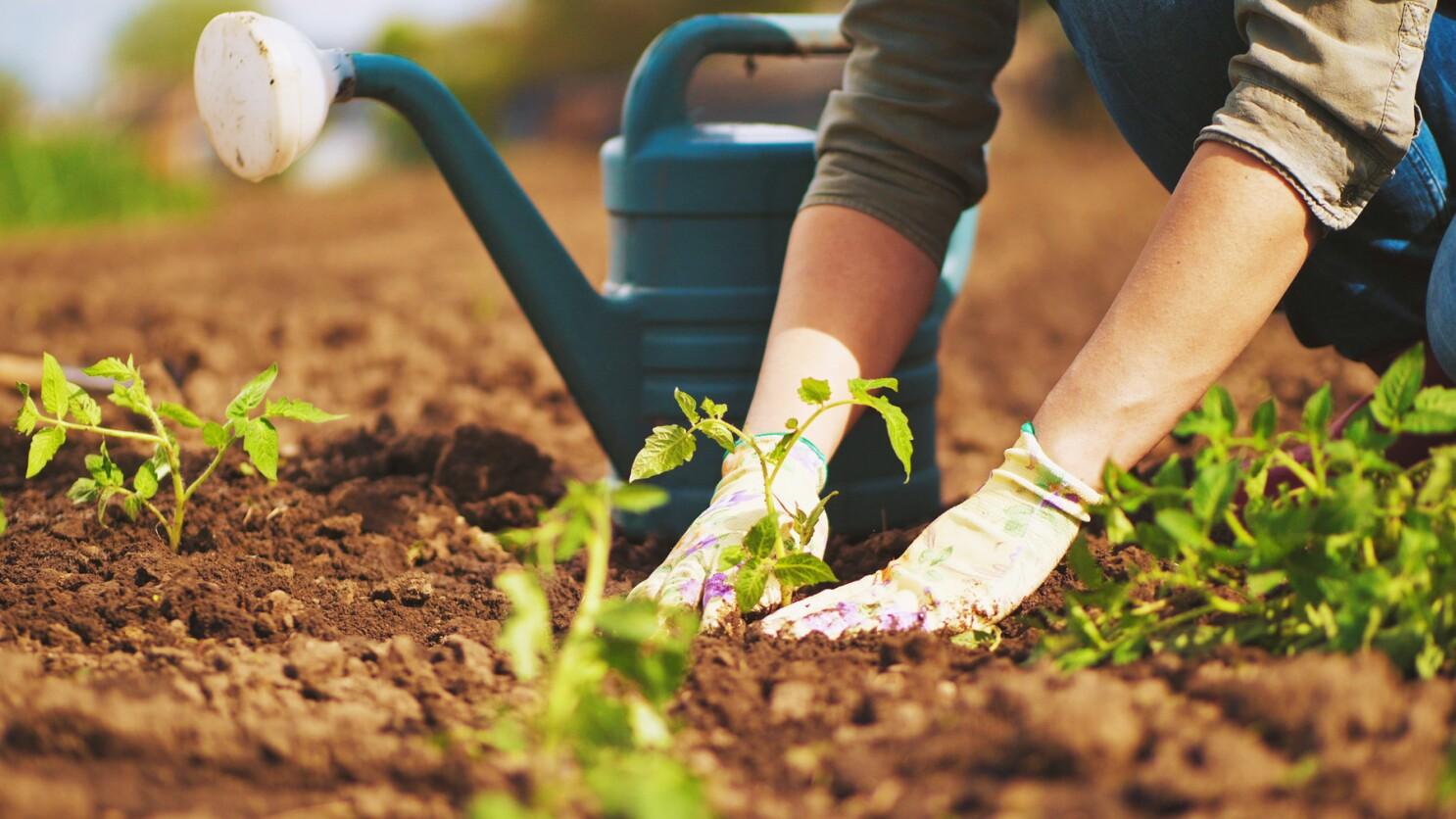 Gardening: Why I garden - Pomerado News