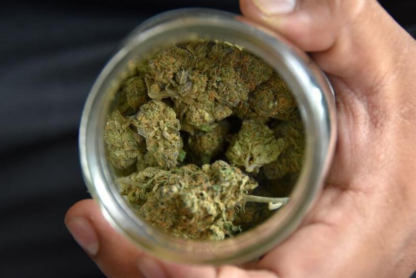 Una persona muestra un recipiente con marihuana en Los Ángeles, California (EE.UU.). EFE/Archivo
