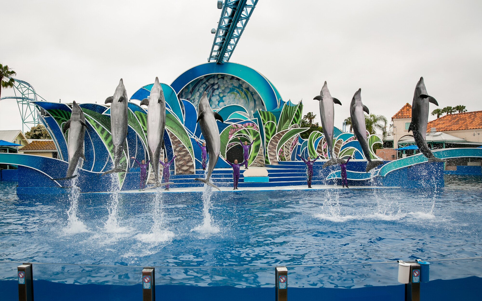Trainers lead dolphins through a series of acrobatic performances during a packed Dolphin Days show at SeaWorld in June.