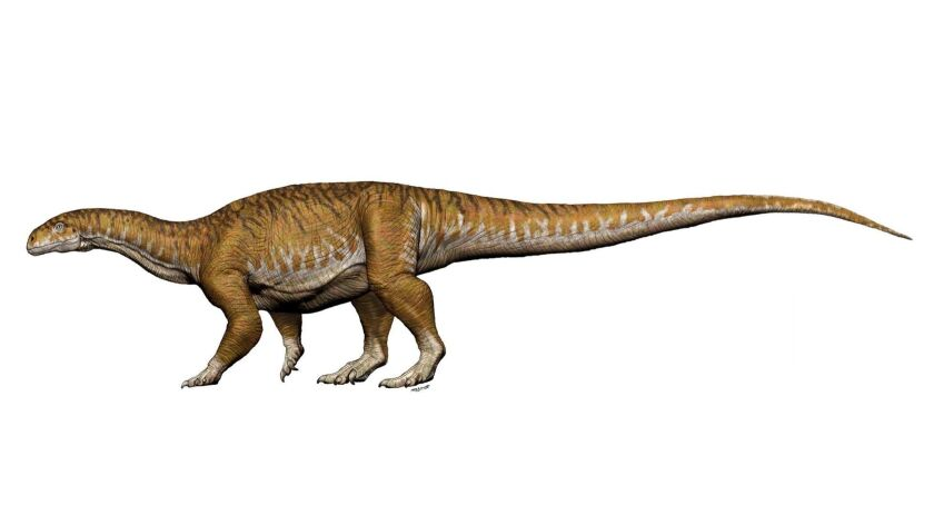 These Long Necked Elephant Sized Dinosaurs Arose Long Before Brachiosaurus Los Angeles Times
