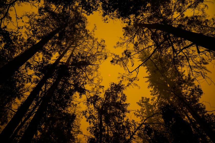 Trees against a smoky orange sky