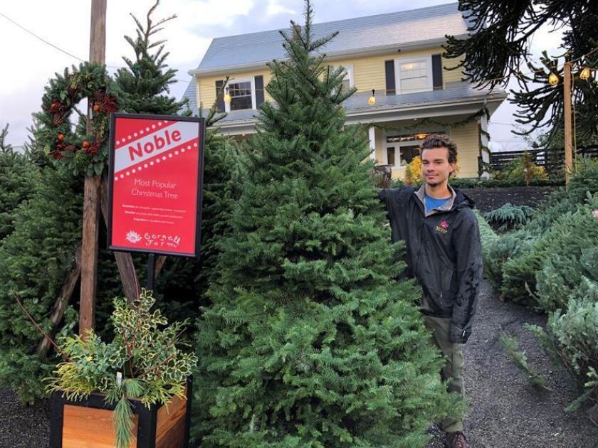 Fotografía del 27 de noviembre de 2018, donde aparece un trabajador de la granja Cornell, en Portland (Estados Unidos). EFE