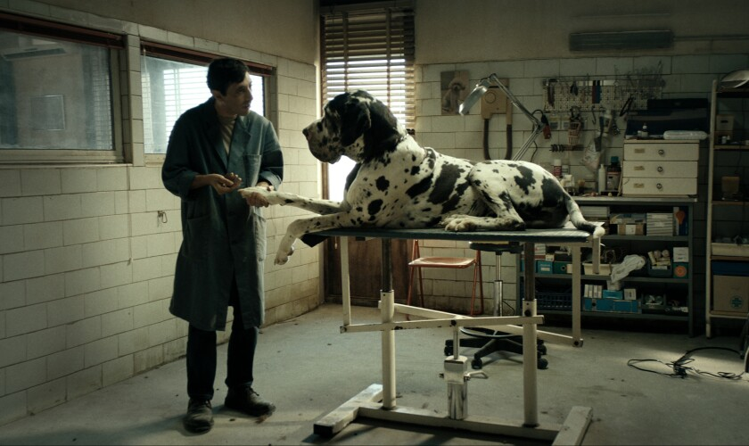 """Marcello Fonte in the drama """"Dogman."""""""