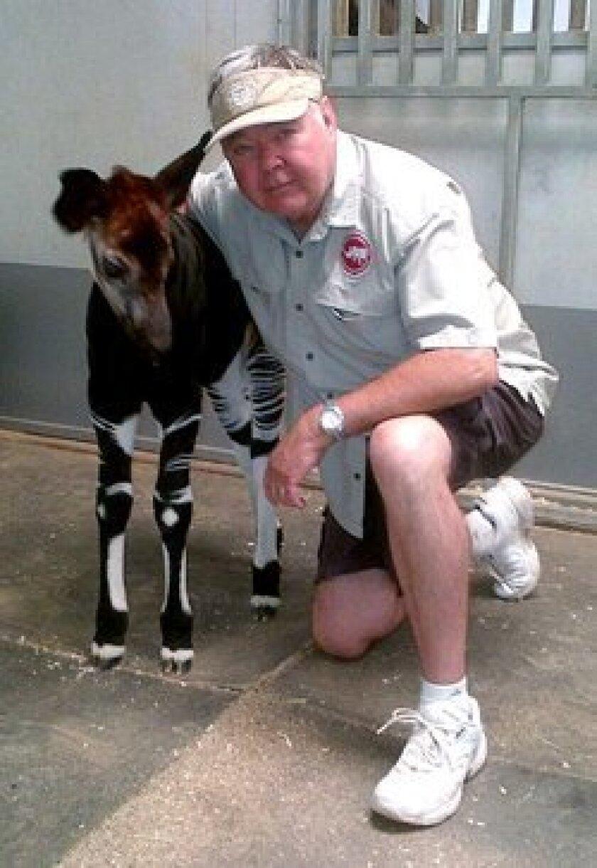 Doug Giese with Baby Okapi.