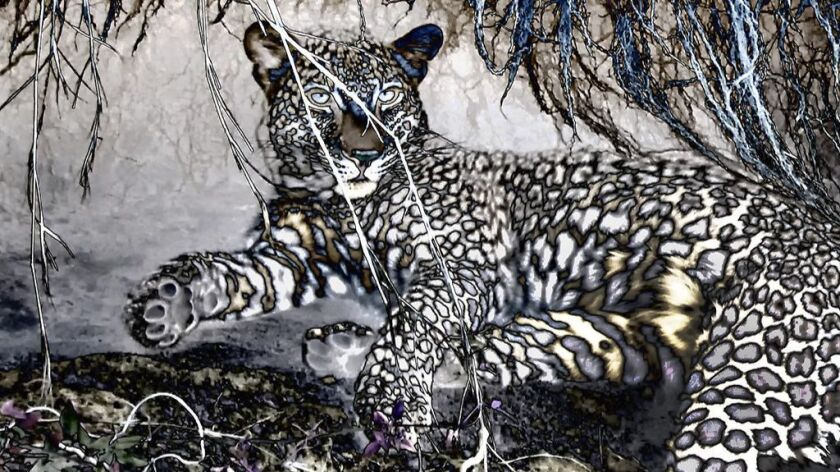"""Mara Leopard's Den"" by Pamela York as part of 'Where We Wander' exhibit"