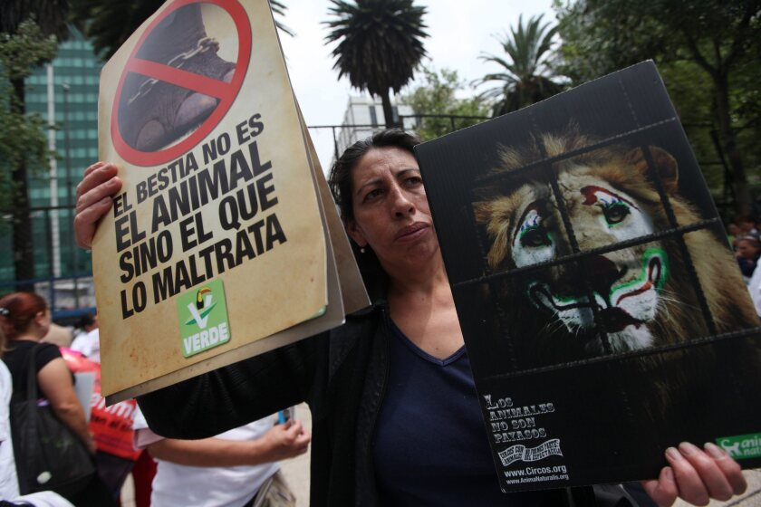 Protest against the arrival of Ringling Bros. Circus in Mexico