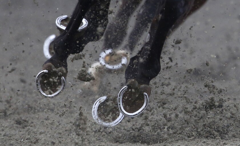 SUNBURY, ENGLAND - FEBRUARY 27: A general view of runners hooves at Kempton Park racecourse on February 27, 2016 in Sunbury, England. (Photo by Alan Crowhurst/Getty Images)
