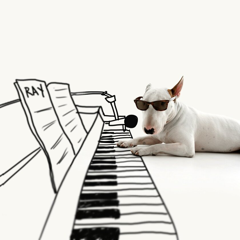 This 2013 photo provided by artist Rafael Mantesso shows his bull terrier, Jimmy Choo, with a piano keyboard that Mantesso has drawn in on the floor around him, at his studio in Belo Horizonte, Brazil. The dog was all Mantesso had left after a divorce. But it's become an Internet sensation, the subject of a book and the inspiration for a line of Jimmy Choo handbags and purses designed by Mantesso. (Rafael Mantesso via AP)