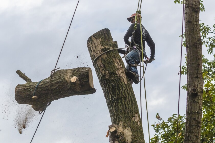 Two Michigan brothers are facing nearly $500,000 in fines after they removed more than 1,400 trees from their property without permission from government officials.