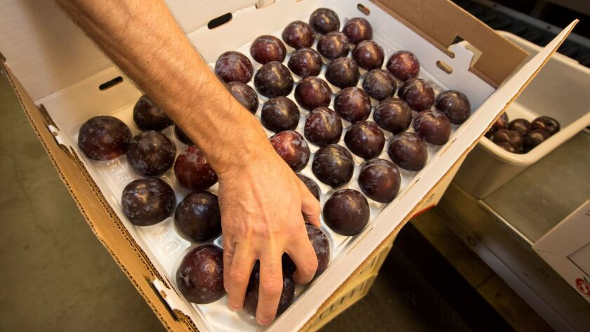 Fruit growers carved out of lost-wage protections