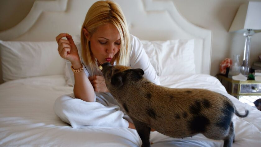 LOS ANGELES, CA-July 11, 2017: Hollywood stylist Tara Swennen feeds cheerios to her pet pig, Sprinkl