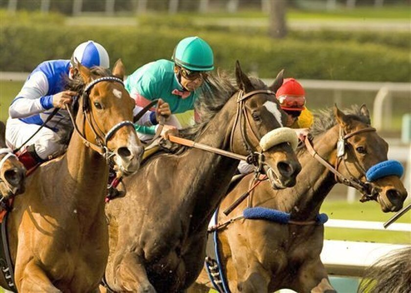 Zenyatta, with Mike Smith aboard (teal cap), splits challengers in the stretch yesterday to win the Santa Margarita Handicap at Santa Anita.