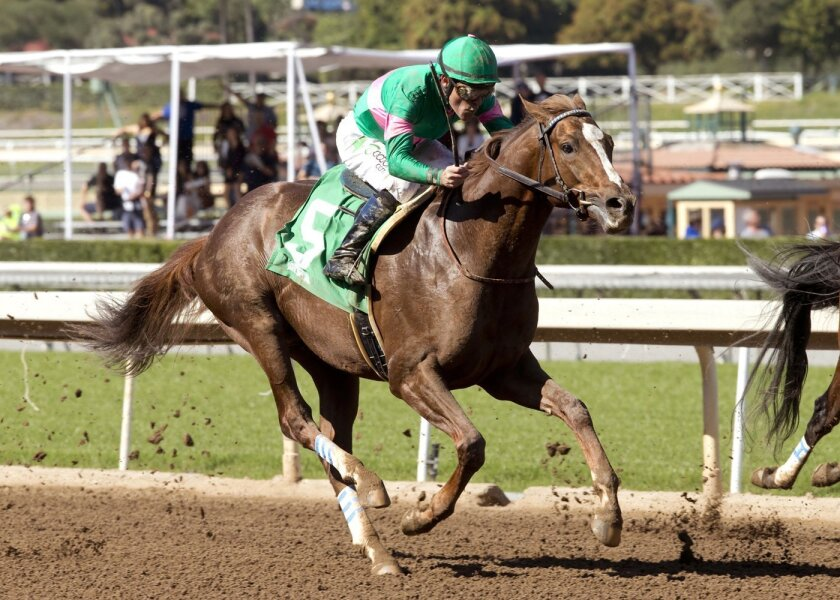 In this photo provided by Benoit Photo, Ziconic, the second foal out of 2010 Horse of the Year Zenyatta, makes his debut in the third race under Gary Stevens in a seven furlong maiden allowance race, Saturday, Feb. 20, 2016, at Santa Anita Park, in Arcadia Calif. (Benoit Photo via AP)