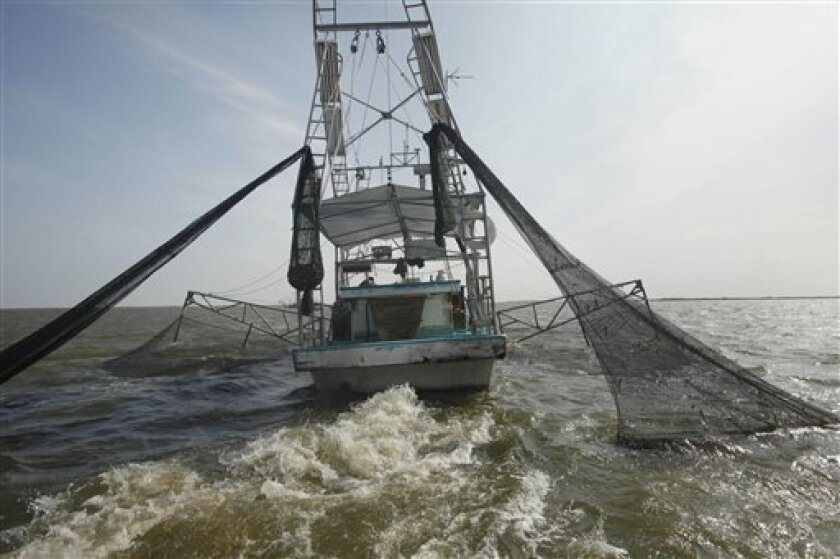 FILE - In an Aug. 16, 2010 file photo, shrimpers haul in their catch in Bastian Bay, near Empire, La., on the first day of shrimping season. Efforts to protect endangered sea turtles in the Gulf of Mexico have prompted strenuous complaints from the dwindling fleet of shrimpers blamed for drowning t