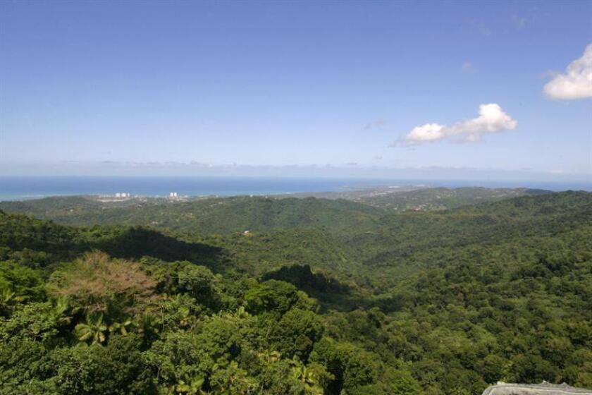 El Servicio Forestal de Estados Unidos anunció que el Bosque Nacional El Yunque de Puerto Rico, uno de los principales atractivos turísticos de la isla, abrirá algunas de sus áreas parcialmente a partir de mañana. EFE/ARCHIVO