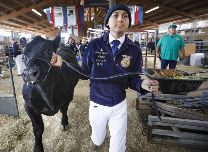 """Enrique Estrella, who is fighting leukemia, heads to the livestock auction with his steer named, """"Phish"""" at the San Diego County Fair, on Saturday. He'll use the money from the sale for his medical treatments."""
