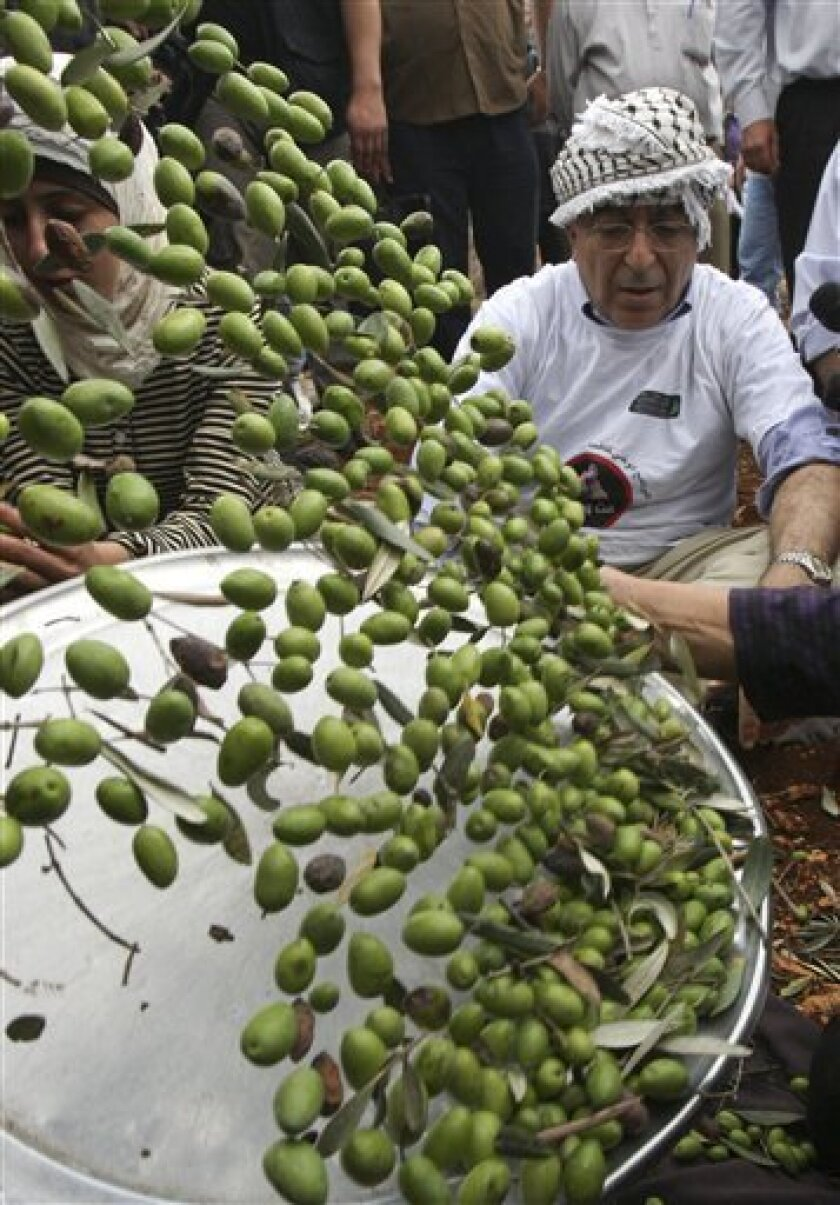 Palestinian Prime Minister Salam Fayyad, right, watches olives being sorted as he visits Palestinian farmers at the beginning of olive harvest season in the West Bank village of Iraq Burin, near Nablus, Saturday, Oct. 9, 2010. (AP Photo/Nasser Ishtayeh)