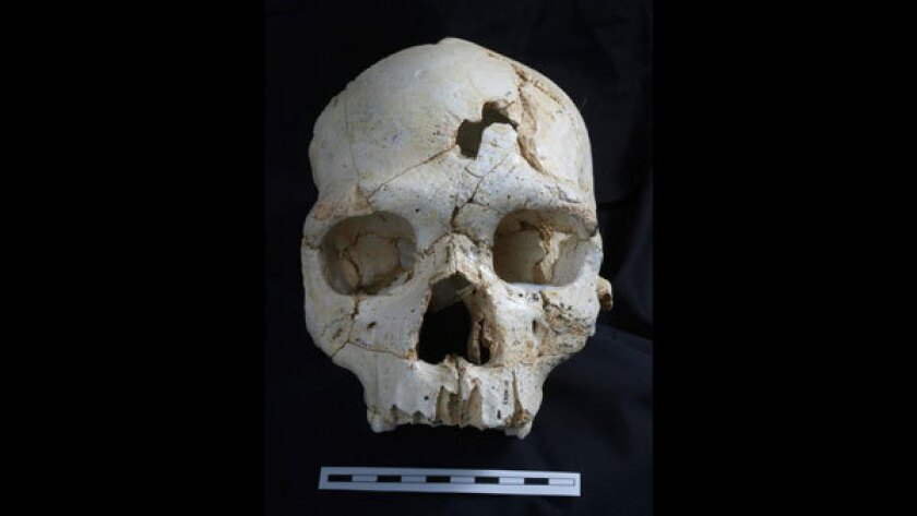Does this ancient skull show evidence of the first known hominid murder?
